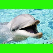 جميلة الدلافين اللغز! لعبة