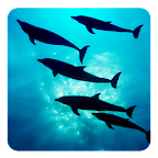 Deep Ocean 3D Free