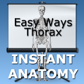Easy Ways Thorax