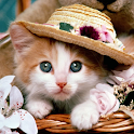Cute Kittens Cat Pictures icon