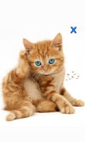 Screenshot of Talking, Dancing Cat.