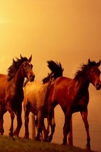 Awesome Horse Wallpaper - screenshot thumbnail