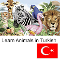Learn Animals in Turkish
