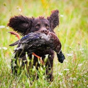 Brownie Having Fun! by Paul Brown Jr. - Animals - Dogs Running (  )