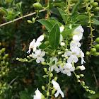 White Sky Flower