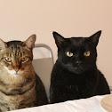 Brazilian Street Cats