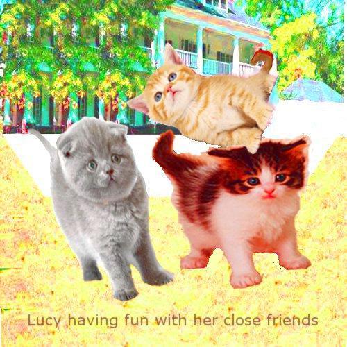 會說話的貓與朋友同行