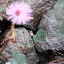 Orbweaving spider