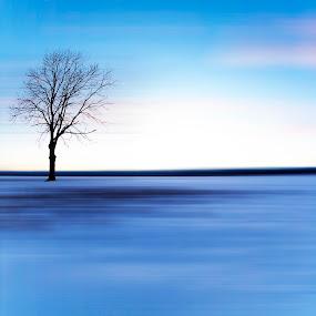 tree on field by Dominik Konjedic - Digital Art Abstract ( colour, field, tree, snow )