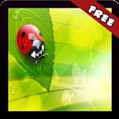 Ladybugs Wallpaper