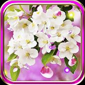 Apple Blossom Nice HD LWP