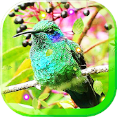 Colibri Sounds live wallpaper