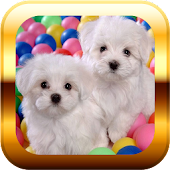 Small Dogs Puzzle & Wallpapers