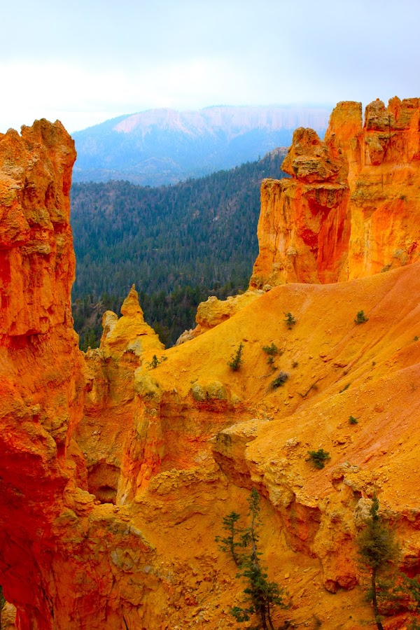 Sandstone, Pine Covered and Snow Covered by Darlene Dunnum - Landscapes Mountains & Hills ( mountains, utah, sandstone, pine trees, bryce national park, snow covered )