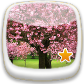 Cherry blossom ★ Wallpaper 10