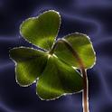 Lucky Clover LWP logo