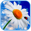 3D Flowers live wallpaper icon