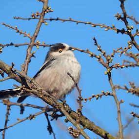 by Marijan Alaniz - Animals Birds (  )