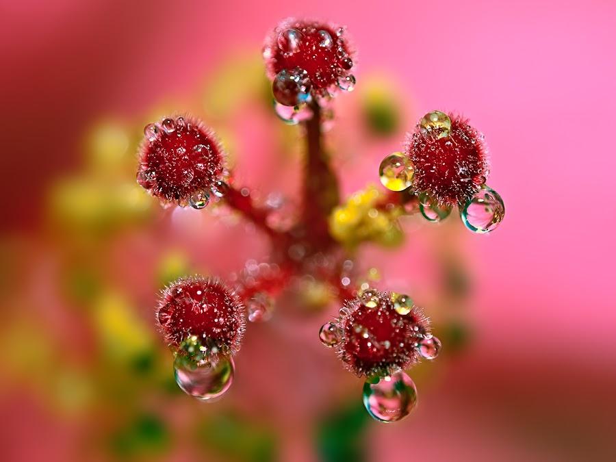 by Carlos De Sousa Ramos - Nature Up Close Natural Waterdrops (  )