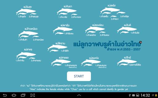 玩教育App|THAI WHALES 2015免費|APP試玩
