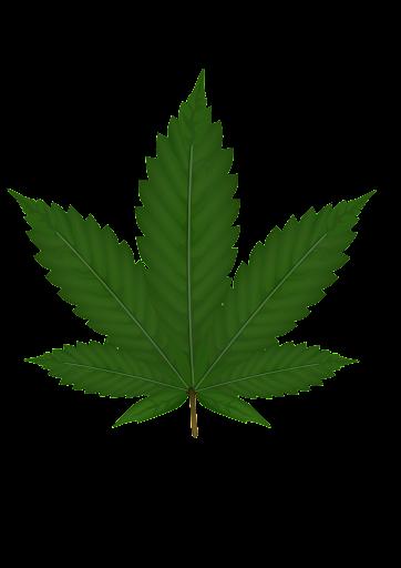 cannabis grow tutorial