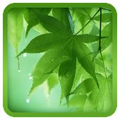 Leaf Live Wallpaper