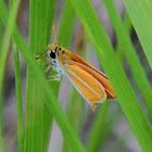 Southern Skipperling Butterfly