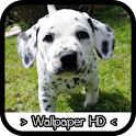 Dalmatians Wallpapers HD icon