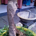 Rotten Palm