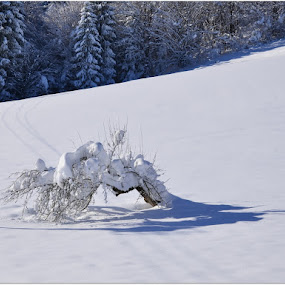 by Silva Predalič - Landscapes Prairies, Meadows & Fields ( field, winter, snow, path, sunshine, forest, shadows, lonely tree, heaviness, cold,  )