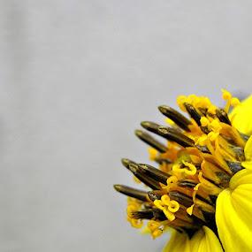 by Delphine Jourdren - Flowers Single Flower