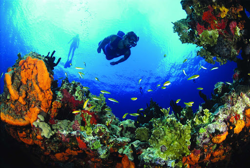 scuba-couple-reef-st-croix-US-Virgin-Islands - Grab your scuba gear and have a great dive on the candy-colored reefs near Buck Island on St. Croix in the U.S. Virgin Islands.