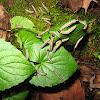 Aggregation of Caterpillars