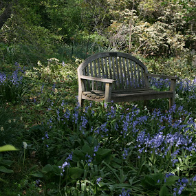 Bench amongst wildflowers by Dianne Collins - City,  Street & Park  City Parks
