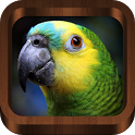 Bird Calls 4500+ Songs & Sound icon
