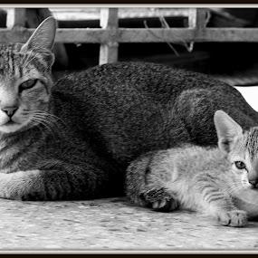 by Sourav Tripathi - Animals - Cats Portraits