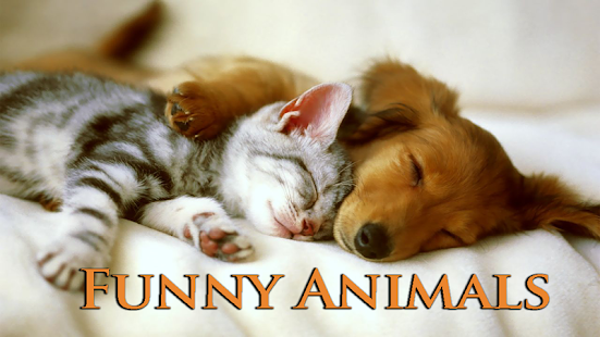 Funny Animals - screenshot thumbnail