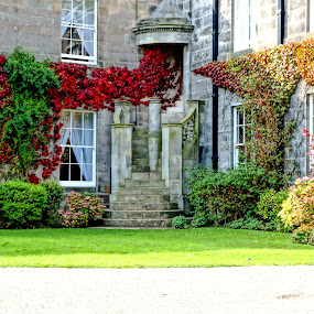 Stately home by Shona McQuilken - Buildings & Architecture Other Exteriors ( home, stairs, mansion, stately, windows, ivy, hotel, wall, country, manor )