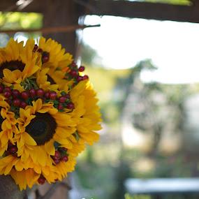 sun flowers by Dorin Crisan - Flowers Flower Arangements ( Flowers, Flower Arrangements )