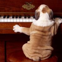 A great musician