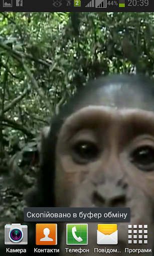 Monkey found your phone LiveWP