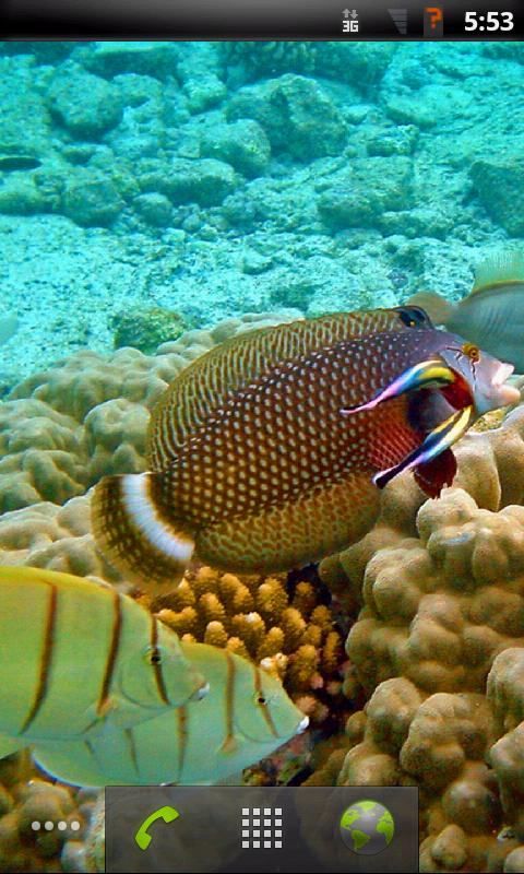 Tropical fish live wallpaper android apps on google play for Live fish store