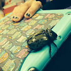Hercules Beetle (female)