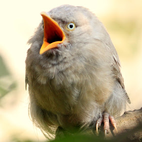Feeling Sleepy  by Prithwish Mondal - Animals Birds