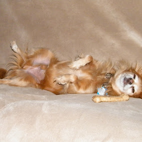 Kiever had a ruff day keeping bone from Tripod by Donna Probasco - Novices Only Pets ( animal, sleeping, sleep, rest, resting,  )