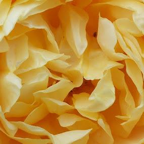 by Monica Dragomir - Flowers Flower Gardens