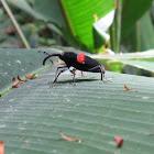 Weevil Knievil