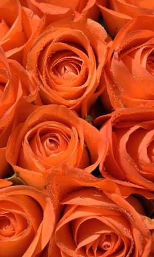 【Sci-Lady系列】夜鶯與玫瑰:你可能不知道的南丁格爾 | CASE讀報