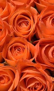 玫瑰花動態桌布app - 免費APP - 電腦王阿達的3C胡言亂語