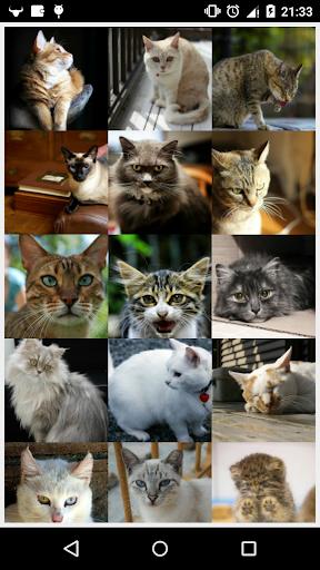 Cute Cats N-Tille Puzzle